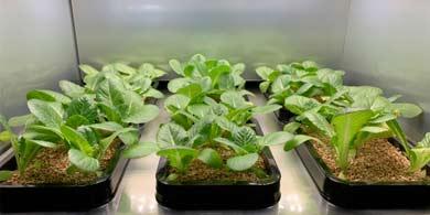 LG presentará un invernadero inteligente para cultivar vegetales en el hogar
