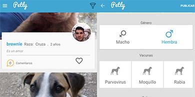 Petly: ¿Cómo es la app mexicana para adoptar mascotas?